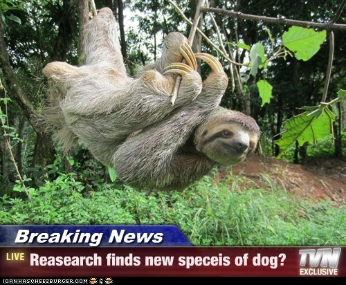 Breaking News - Reasearch finds new speceis of dog?