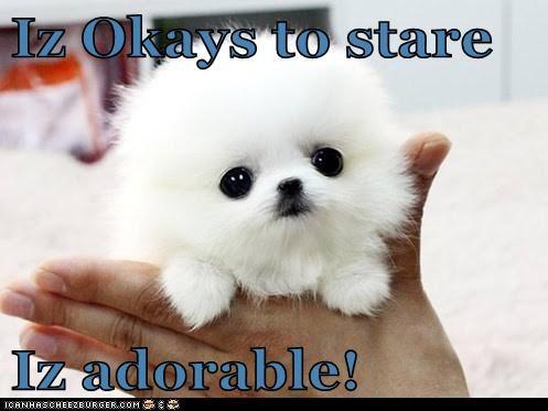 Iz Okays to stare  Iz adorable!