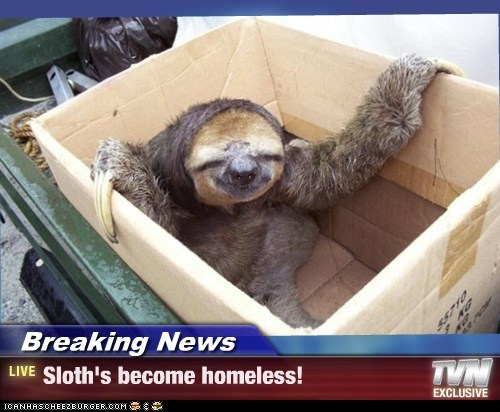 Breaking News - Sloth's become homeless!