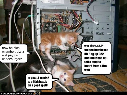 feline IT squad: fixerz wiff catitude