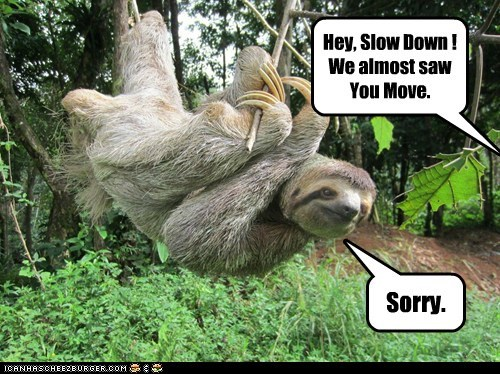 speed,sloths,sorry,moving,slow down