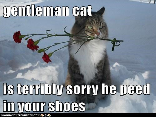 gentleman cat  is terribly sorry he peed in your shoes