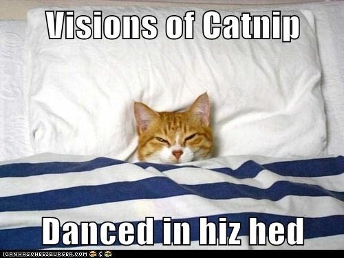 Visions of Catnip  Danced in hiz hed