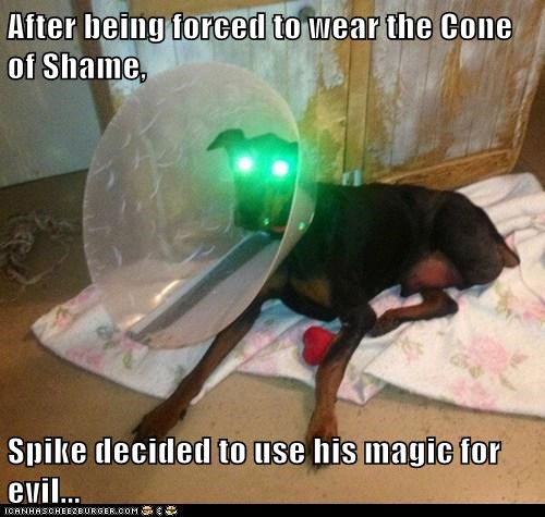 After being forced to wear the Cone of Shame,  Spike decided to use his magic for evil...