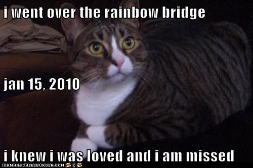 i went over the rainbow bridge jan 15, 2010 i knew i was loved and i am missed