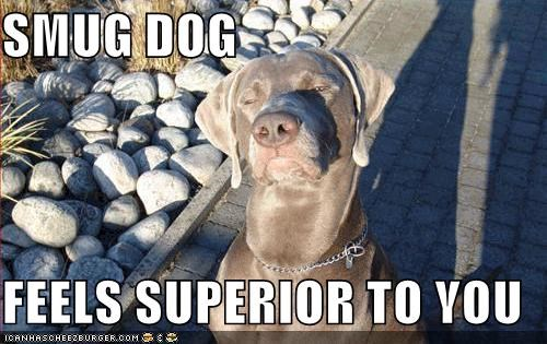 SMUG DOG  FEELS SUPERIOR TO YOU