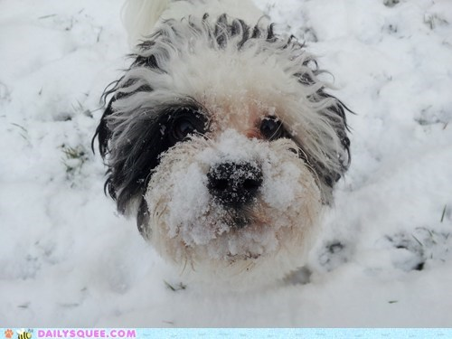 Reader Squee: Snow
