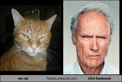 My Cat Totally Looks Like Clint Eastwood