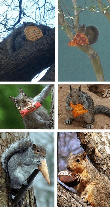 Have YOU Tried the New All-Junk-Food Squirrel Diet?