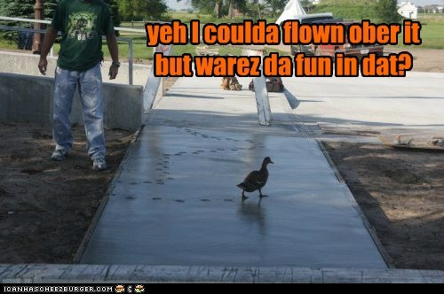 fun,of course,ducks,tracks,flown,walking,cement