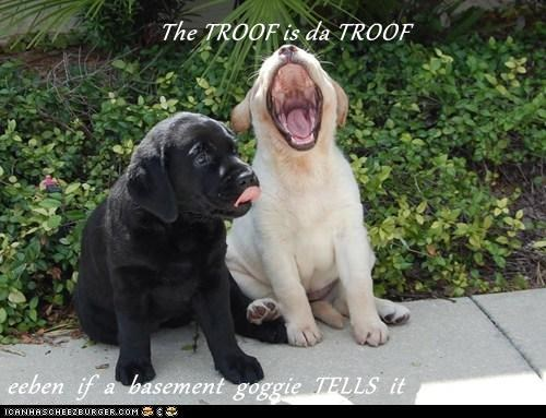 The TROOF is da TROOF  eeben  if  a  basement  goggie  TELLS  it