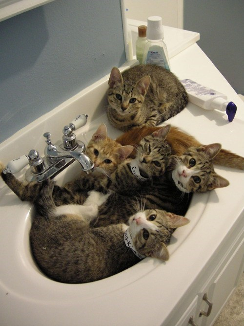Sink full of cats