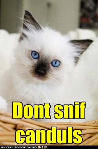 cat,lesson,psa,kitten,advice,kitty,funny