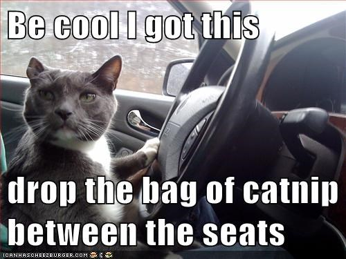 Be cool I got this  drop the bag of catnip between the seats