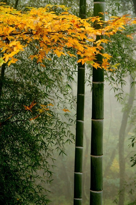 Forest,bamboo,pretty colors