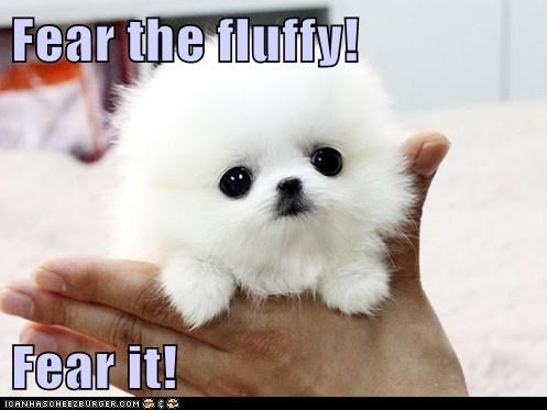 Fear the fluffy!  Fear it!