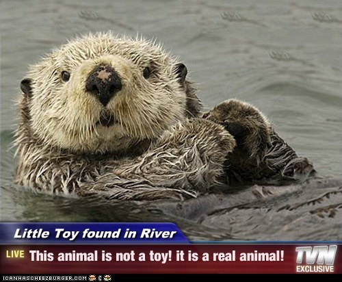 Little Toy found in River - This animal is not a toy! it is a real animal!