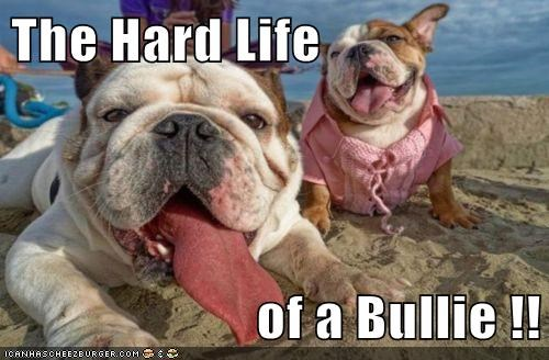 The Hard Life   of a Bullie !!