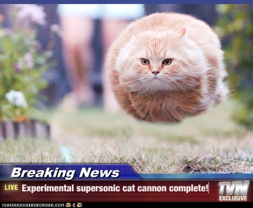 Breaking News - Experimental supersonic cat cannon complete!