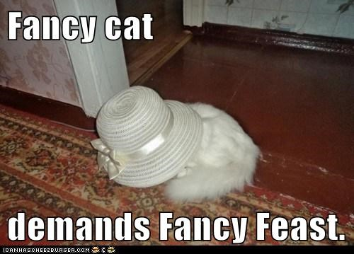 Fancy cat  demands Fancy Feast.