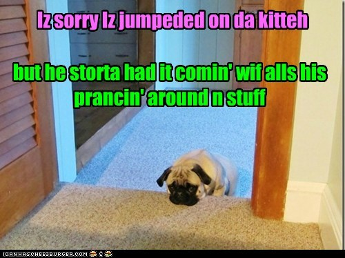 Iz sorry Iz jumpeded on da kitteh