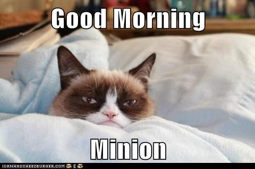 Good Morning  Minion