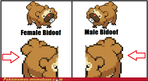 Bidoof has some serious balls