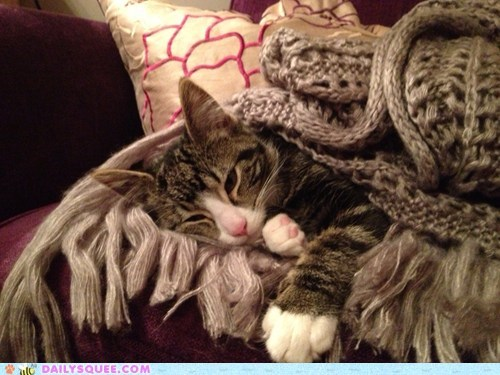 Reader Squee: Snuggly