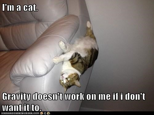 I'm a cat.  Gravity doesn't work on me if i don't want it to.
