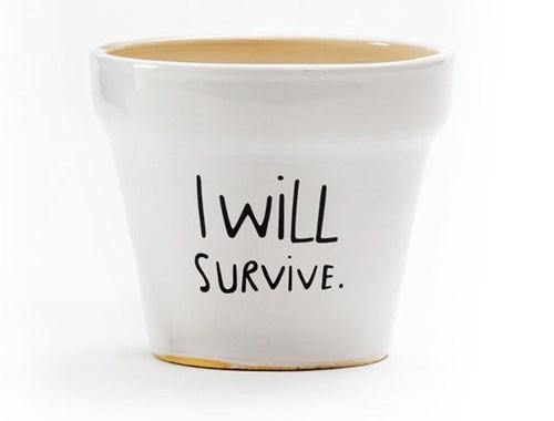flowerpot,ceramic,decor,pot,survive,home