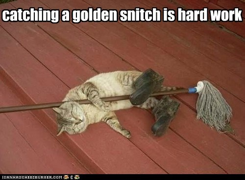 catching a golden snitch is hard work