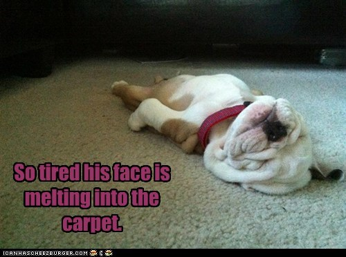 dogs,bulldog,puppies,tired,face melting,carpet