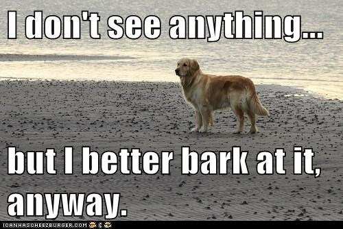 I don't see anything...  but I better bark at it, anyway.