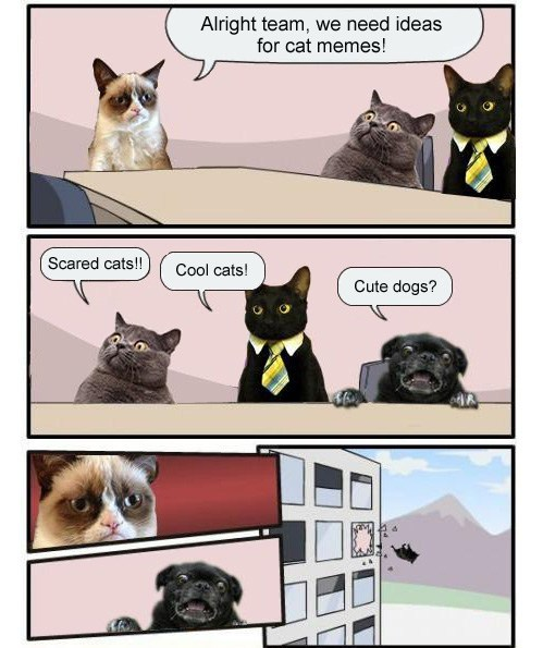 tags business cat memes comic grumpy cat lol by unknown via cybergata