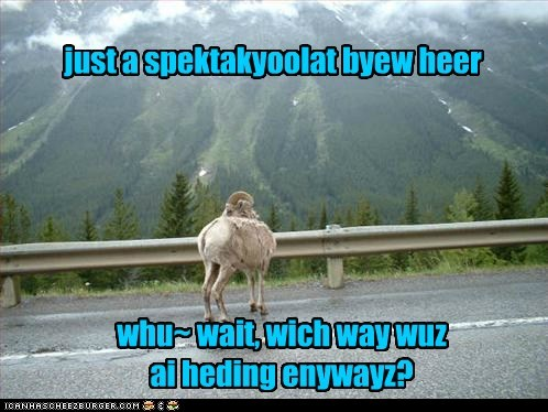 ADHD Mountan Goat
