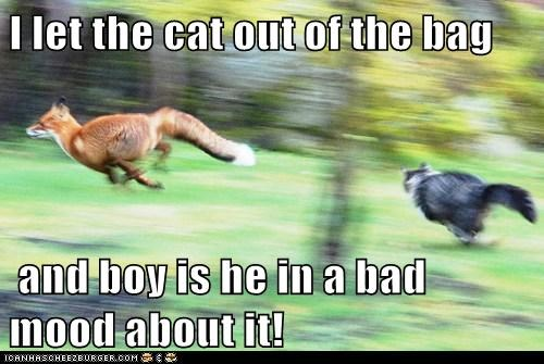 foxes,bad mood,bag,idiom,chasing,angry,let the cat out,Cats