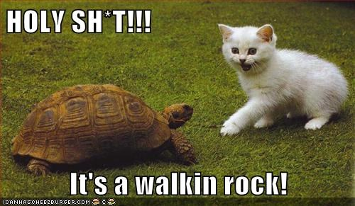 HOLY SH*T!!!  It's a walkin rock!