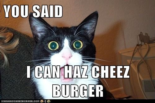 YOU SAID   I CAN HAZ CHEEZ BURGER