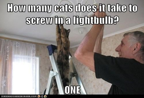 How many cats does it take to screw in a lightbulb?  ONE