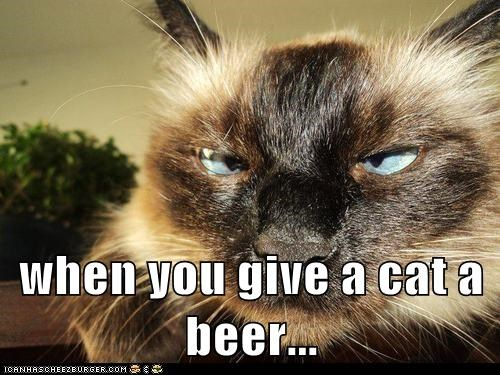 when you give a cat a beer...