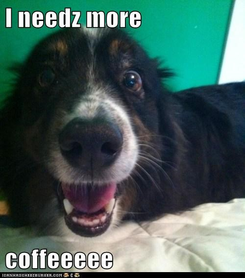 I needz more  coffeeeee