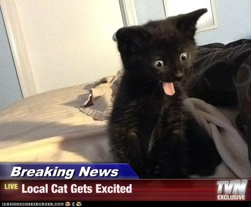 Breaking News - Local Cat Gets Excited
