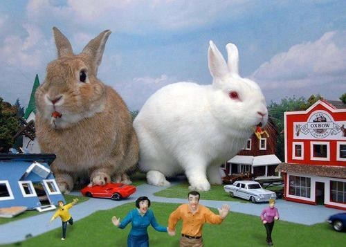 Bunday,attack,giant,rabbit,bunny,squee,monster
