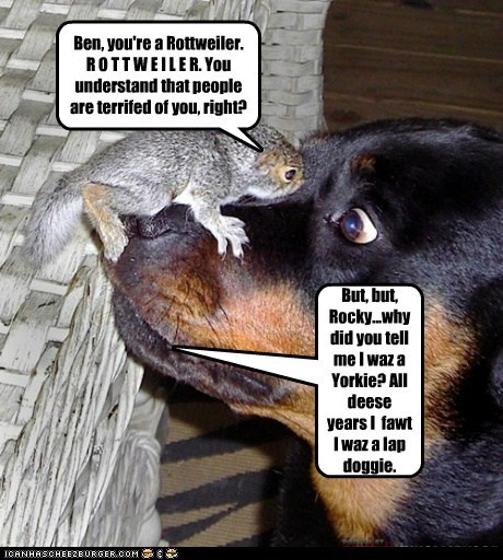 Ben, you're a Rottweiler. R O T T W E I L E R. You understand that people are terrifed of you, right?