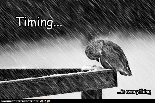 timing,birds,everything,cold,rain