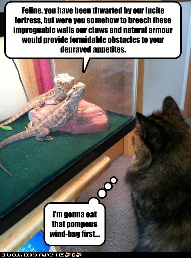 Feline, You Have Been Thwarted...