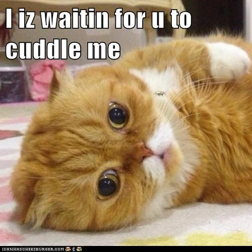 I iz waitin for u to cuddle me