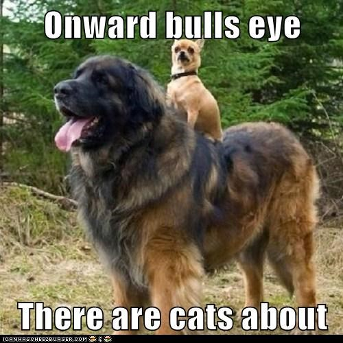 Onward bulls eye   There are cats about