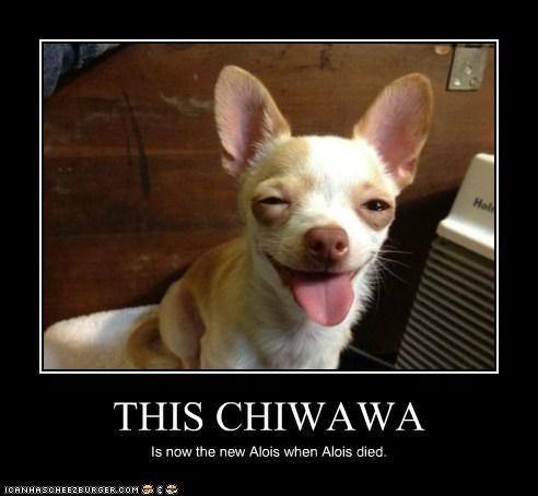 THIS CHIWAWA