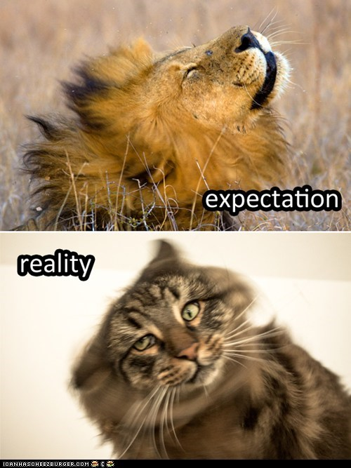 Expecation Lion shake vs reality